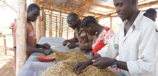south sudan coffee farmers